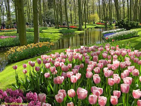 bunga tercantik di dunia taman bunga nusantara indonesian flower garden