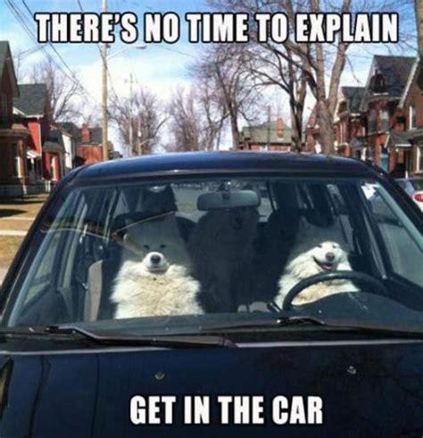 pet proof  car    clean  news wheel