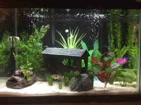 Aquarium Decoration Ideas Freshwater 25 Best Ideas About 20 Gallon Aquarium On Pinterest 1