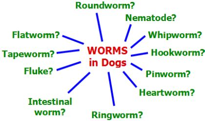 types of worms in dogs worms everything you need to pets world