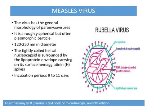 h protein measles virus structure
