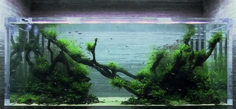 Takashi Amano Aquascaping by Takashi Amano Aquascaping Guru Dies At 61 Years
