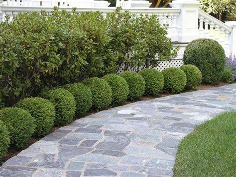 Landscape Ideas Using Boxwoods Best 20 Boxwood Landscaping Ideas On Driveway