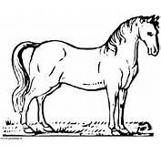 Pictures Kleurplaten Dieren Paarden Kleurplaat Paard Car Tuning