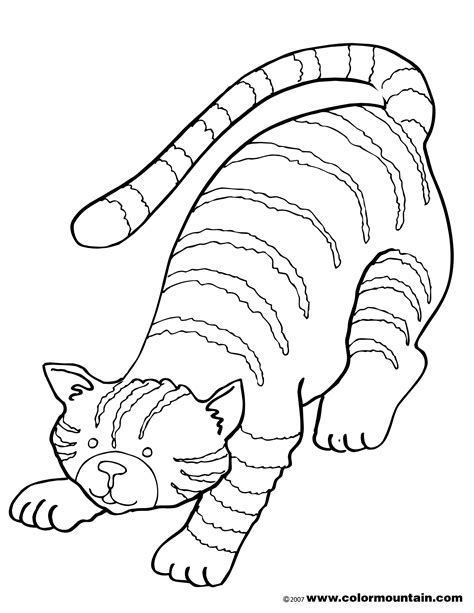tabby cats free coloring pages