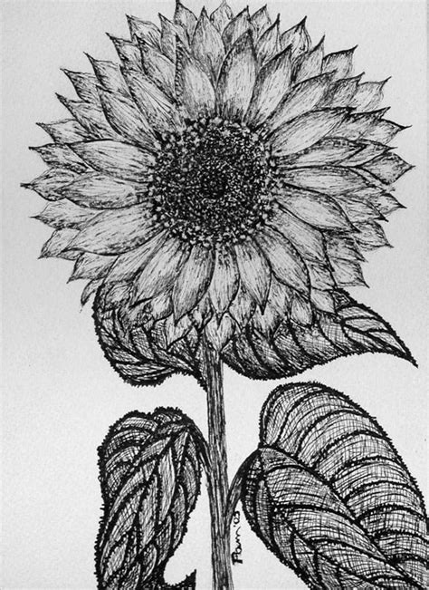 cool sunflower drawings www imgkid com the image kid