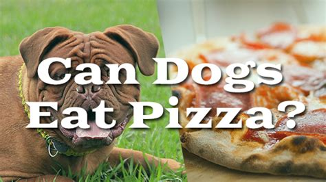 can dogs eat pizza can dogs eat pizza pet consider