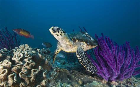 dive oman dive oman original diving