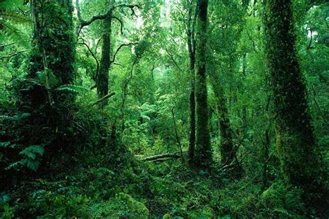 beautiful rainforest backgrounds wallpaper pictures