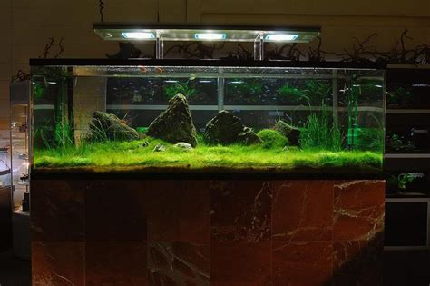 Green Machine Aquascape by The Green Machine Uk Aquatic Plant Society