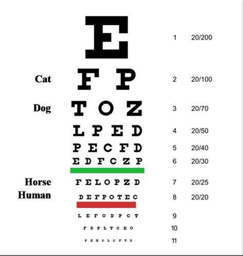 printable eye color chart visual acuity of cats