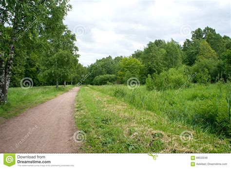 road in forest stock photo image of darkness mist country road in forest stock photo image of