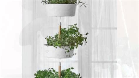 tanaman gantung unik doovi