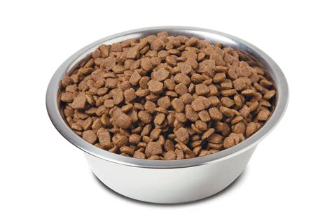 puppy food low grain premium food introduced by dynamite