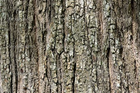 tree texture background trees texture