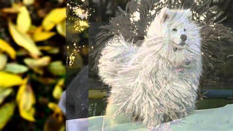 impresionantes imagenes realistas de estos villanos 161 estos animales tienen los pelos m 225 s impresionantes youtube