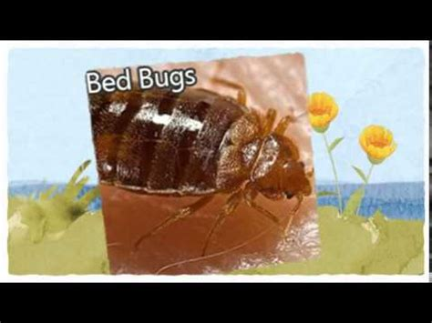 bed bugs youtube official pest control auburn ca 916 226 4836 bed bugs