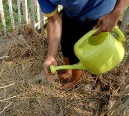 cara membuat kolase jerami cara membuat kompos dari kotoran sapi kambing dan jerami