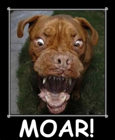 Most Hilarious Animals by The Most Hilarious Animal Emotions 60 Pics