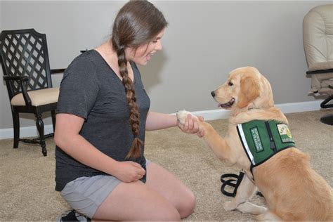 new horizons service dogs to help others windermere observer west orange times