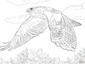 hawk coloring pages tailed hawk in flight coloring page free printable