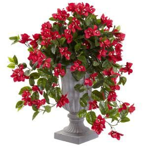 nearly bougainvillea with urn uv resistant indoor