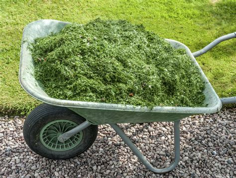 grass clipping garden mulch using fresh or dried grass
