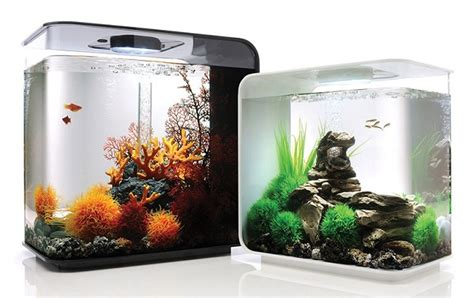 Jual Lu Hias Aquarium model dan harga aquarium mini cara budidaya ikan