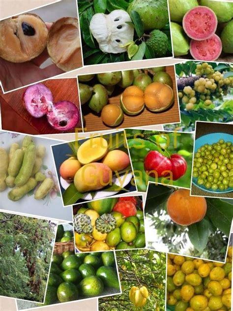 guyana fruit trees guyana favorites fruits oh beautiful guyana where i