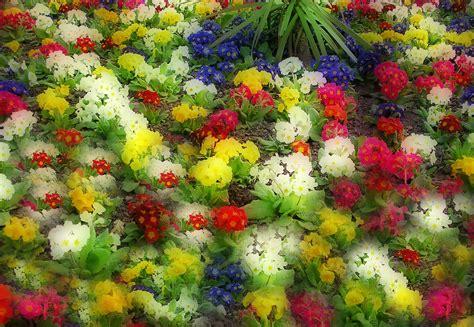 recapitare fiori usare i fiori per descrivere i propri sentimenti