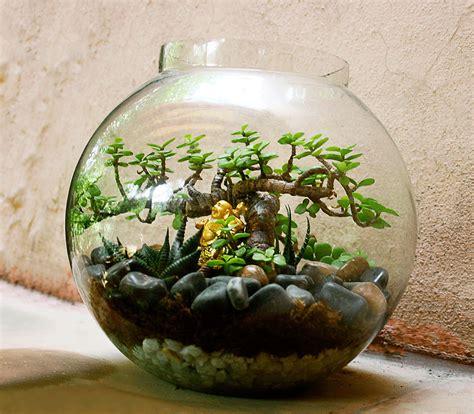 glass bowl plants ozziesterrariums
