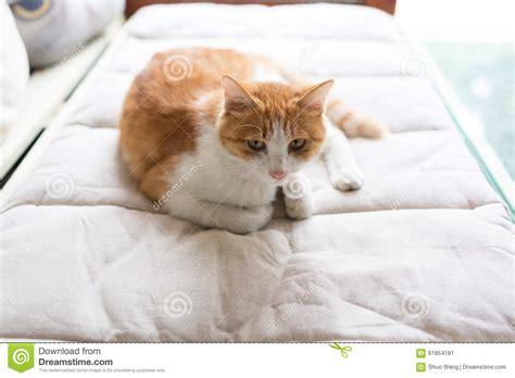 katze pinkelt auf bett katze auf dem bett stockfoto bild 61854161