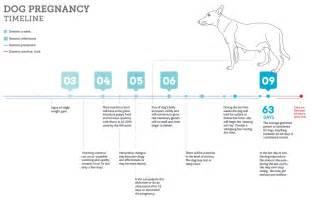 canine pregnancy timeline calendar template 2016