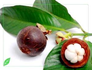 Saritokek Obat Mujarab Untuk Segala Jenis Penyakit Kulit Membandal 1 obat tradisional sakit pinggang mujarab tips tepat obati