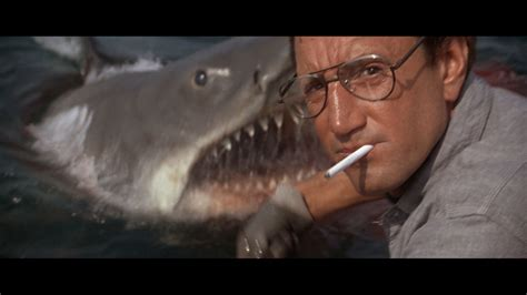 jaws we re gonna need a bigger boat jaws you re gonna need a bigger boat magic and tragic