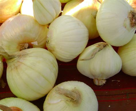 onion linksrc ru onionlink new style for 2016 2017