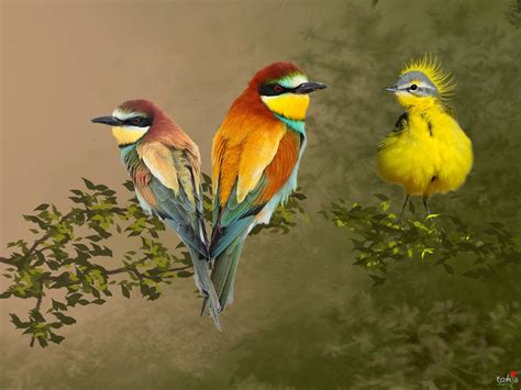 colorful birds wow colorful birds hd wallpaper