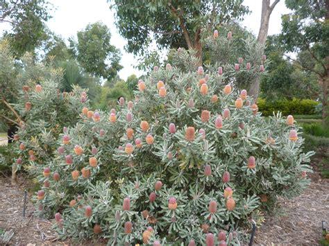 royal botanic garden cranbourne cranbourne royal botanic gardens melbourne