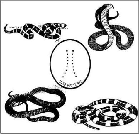 coral snake coloring page 2164 best images about coloring pages on pinterest