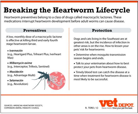 heartworm prevention fort caroline animal clinic veterinarian in jacksonville