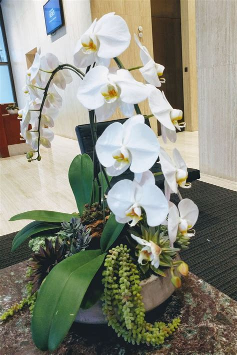 Best 25  Orchid arrangements ideas on Pinterest   Orchid
