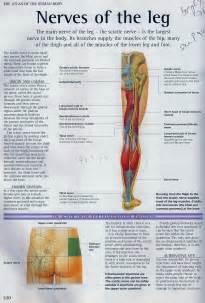 Sciatica stretches for sciatica treatment for sciatic nerve pain