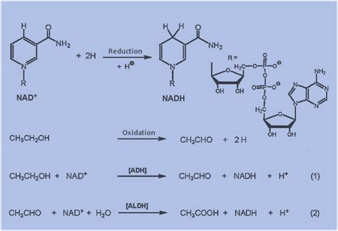 Acetaldehyde Detox by Studies Biochemistry For Medics Lecture Notes