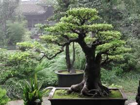 Topiary Wire Shapes - the gift of giving life lessons from the bonsai finally