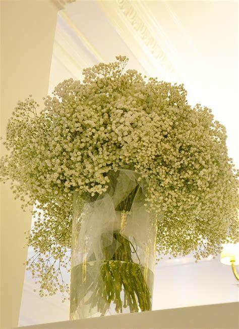 fiore velo da sposa gypsophila paniculata detta volgarmente velo di sposa o