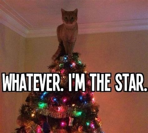 Cute Christmas Meme - the best ideas about cat christmas christmas trees and
