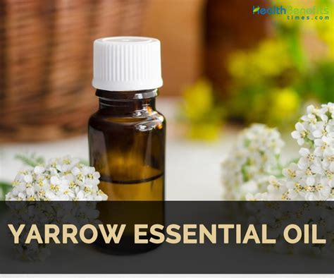 yarrow chamazulene blue essential essential yarrow essential facts and health benefits