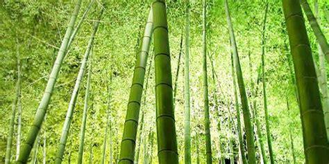 Serian Longdress Bali Motif Bambu stuoie cannette bamboo in rotoli per coperture e parasole