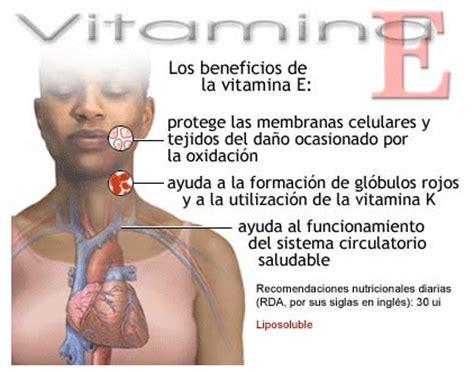 que alimentos tienen vitamina e l 237 pidos clasificaci 243 n l 237 pidos insaponificables terpenos