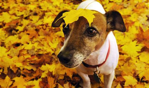 dogs acorns can acorns and conkers make your sick are acorns bad for pets nature